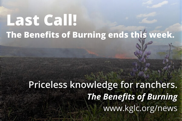 Benefits of Burning #5 of Series